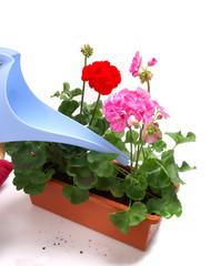 Planting  - ba