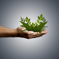 naturaleza, mano con plantas