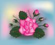 Pink rose background, vector illustration