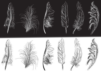 twelve black and white isolated feathers
