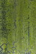 Green Moss texture - Mossy wall outdoors