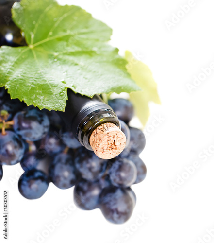 Bottle of wine on the white background