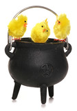 easter chicks in a cauldren