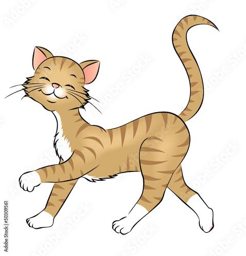 Fotobehang Katten spazierende Katze