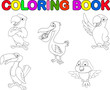 Bird collection coloring book
