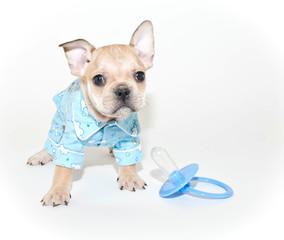 French Bulldog Puppy Wearing Pajamas