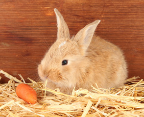 Fluffy foxy rabbit in a haystack with carrot