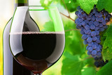Red wine and grapes - Fine Art prints