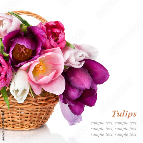Basket with colorful bouquets of spring tulips flowers  isolated