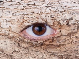 ojo del viejo arbol