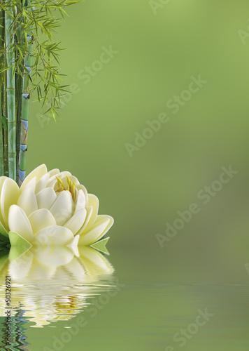 Fototapeten,bambus,zen,lotus,blume