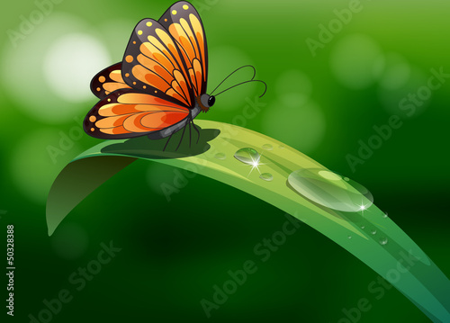 A butterfly above a leaf with water drops