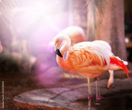 Foto op Plexiglas Flamingo Flamingo