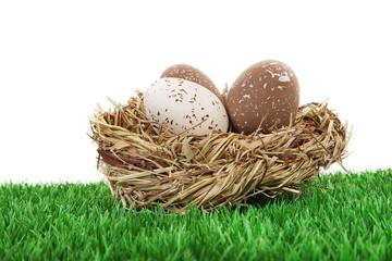 Vogeleier im Nest auf Rasen