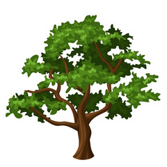 Oak tree. Vector illustration.