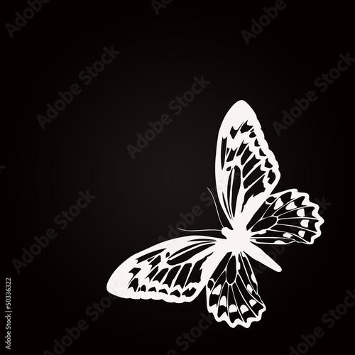 Papillon blanc printemps 2