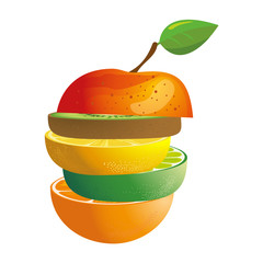 vector illustration -  composing of different fruits