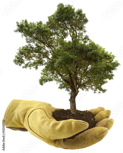 concept protection des arbres, reboisement