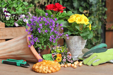 Pflanzen im Frühling, Saatgut
