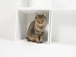 白い箱に入った猫