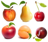 Collection of vector fruits.