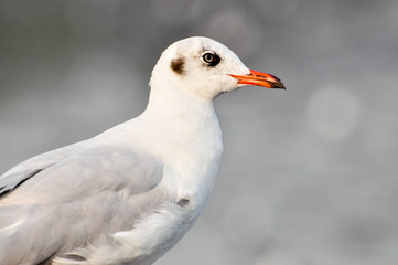 An image of a beautiful seagull in the bright sky