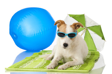 Hund mit Sonnenbrille - Dog with sunglasses
