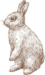 little hare