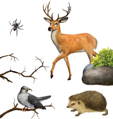Deer, spider. hedgehog, cuckoo on a tree branches.