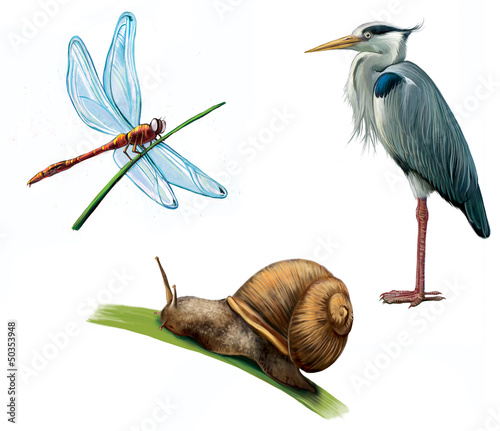 Grey Heron, dragon fly, and snail