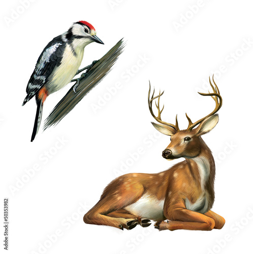 Woodpecker and Deer