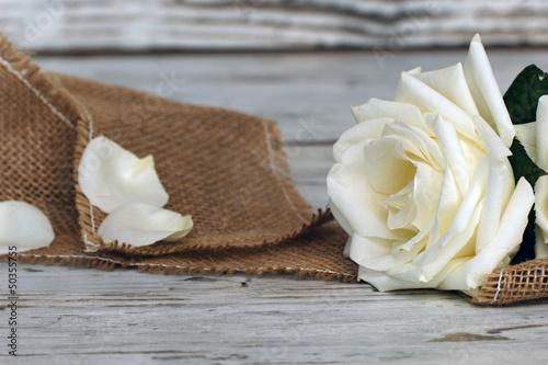 Weisse Rose © Carmen 56