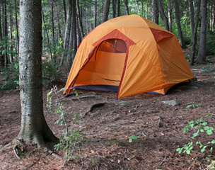 Orange Tent in the Woods