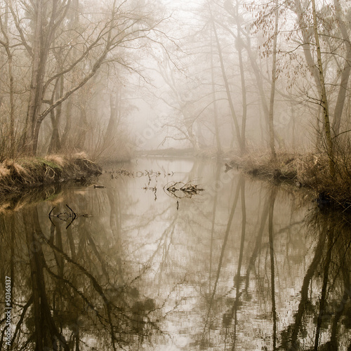 Foto op Canvas Bos in mist Misty Swamp