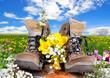 Wanderschuhe Frühling Wiese Blumen