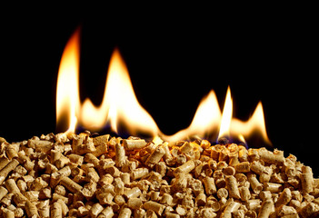 burning Wood chip biomass fuel a renewable alternative source of