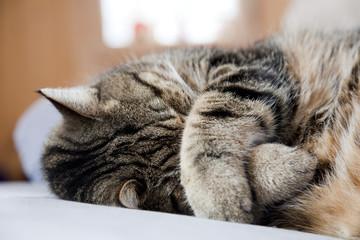 Katze am Schlafen