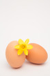 Two eggs and a yellow daffodil and copy space