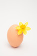 Egg with a small daffodil