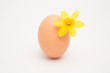 Egg with a small yellow daffodil