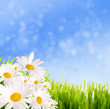 spring summer background
