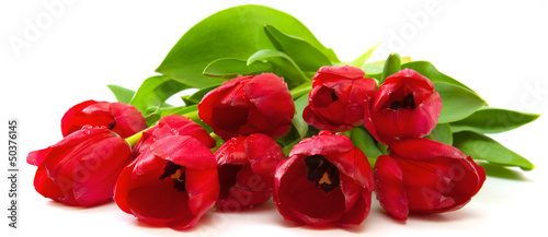 canvas print picture Red tulips bouquet.