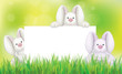 Rabbits holding white blank for Easter's design.