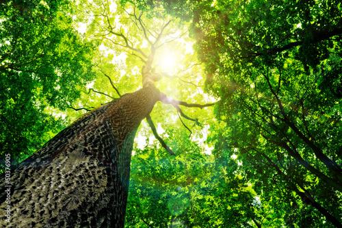 Aluminium Meest verkochte foto's forest