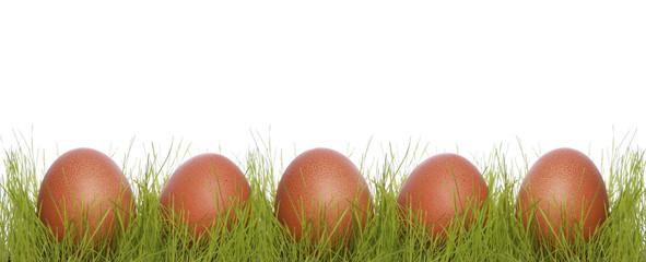 Brown chicken eggs in a grass