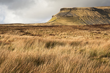 Grassy moors leading to Pen-y-Ghent in Yorkshire Dales National