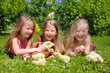Group of little girls with chicks