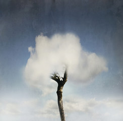 Tree  in the cloud