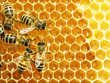 Close up view of the working bees on honey cells - 50392142
