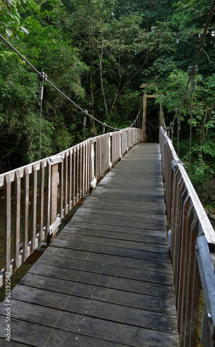 most w dżungli